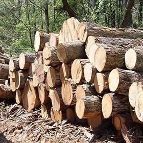 legno_biomassa_cippato_pellet
